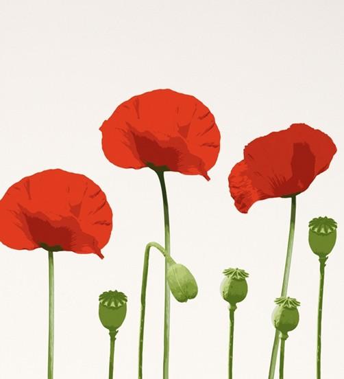 Wandtattoo Rote Blumen : Wandtattoo rote Mohnblumen mit Kapseln Wohnen Dekosticker Wandtattoos